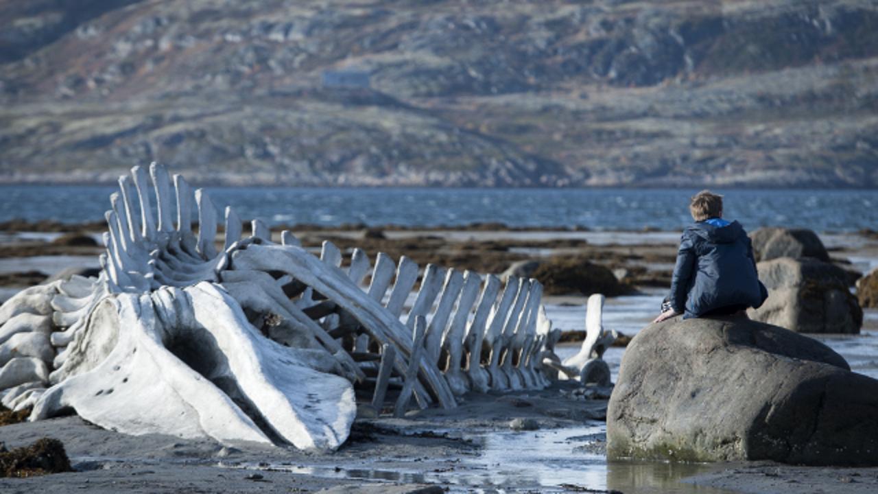 Leviathan - CineFatti, Recensione