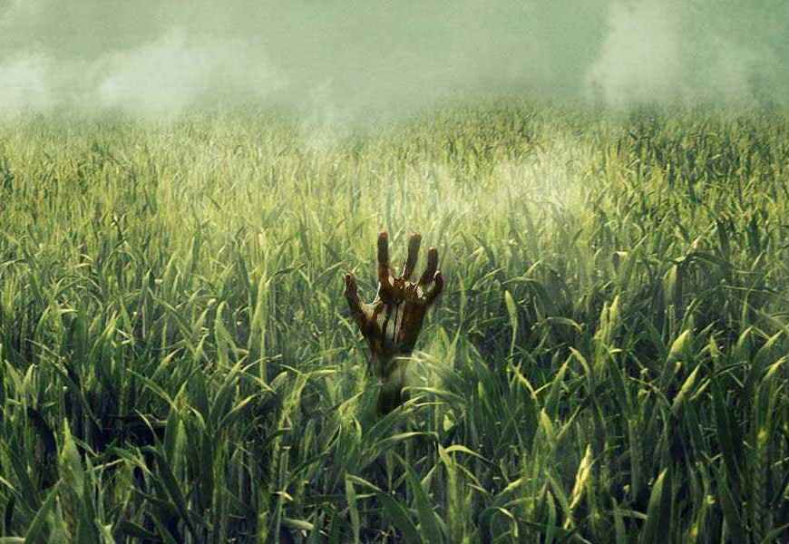 Stephen King's In the Tall Grass - CineFatti